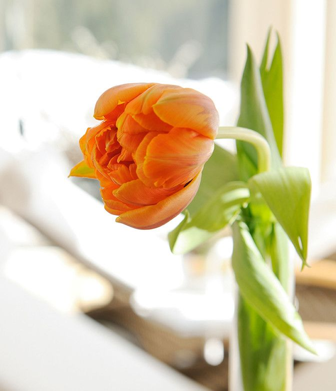 Blume in der Luxuslodge im Spa-Bereich